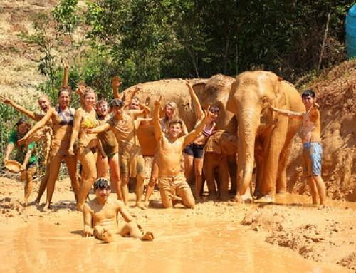Elephant Volunteer Chiang Mai Activities