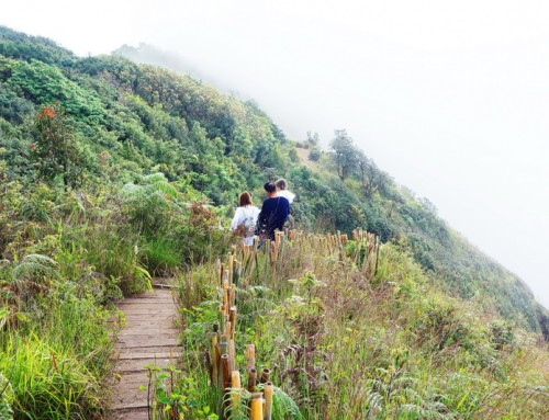 Kew Mae Pan Nature Trail