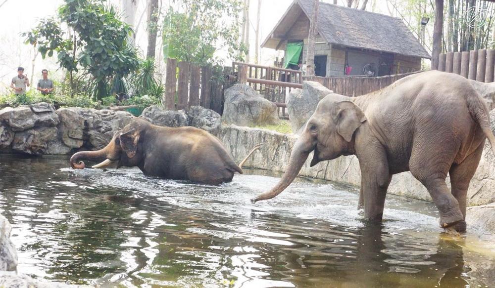 chiang mai zoo, chiangmai zoo, attractions in chiang mai