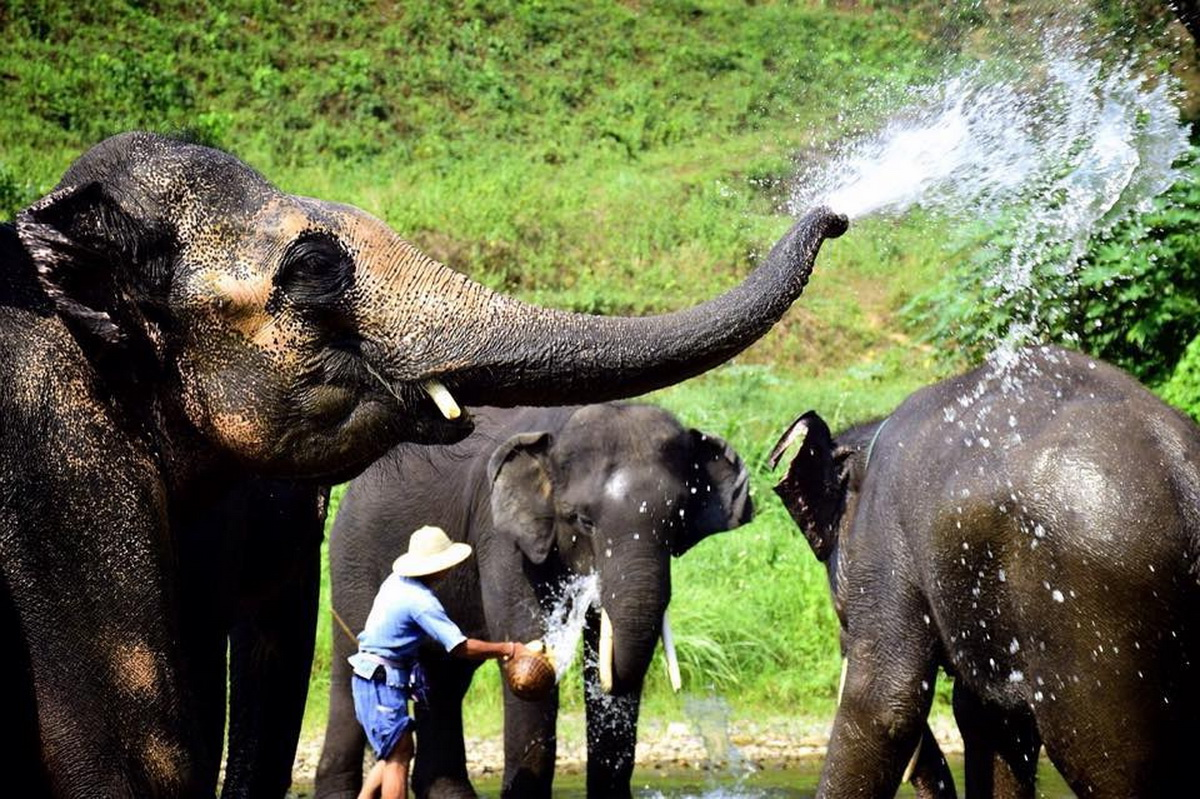 attractions in chiang mai