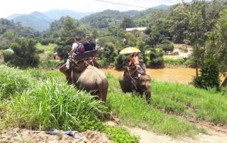 mae tang elephant kingdom, mae tang elephant camp, mae tang elephant, mae taeng elephant kingdom, mae taeng elephant camp, mae taeng elephant