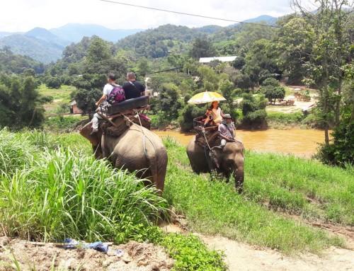 Mae Tang Elephant Kingdom