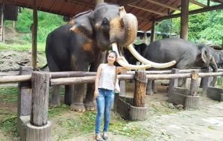mae sa elephant kingdom, mae sa elephan, maesa elephant kingdom, mae sa elephant camp