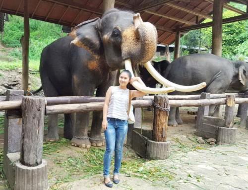 Mae Sa Elephant Kingdom