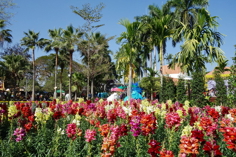 attractions in chiang mai, chiang mai attractions,nongbuakhad park, nongbuakhad, nongbuakhad gardens