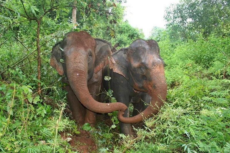 attractions in chiang mai, chiang mai attractions, elephant nature park, elephant nature park chiang maielephant nature park, elephant nature park chiang mai