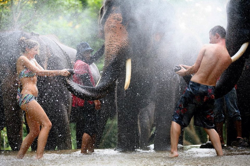 chiang mai activities, thing to do in chiang mai, elephant program, elephant activities