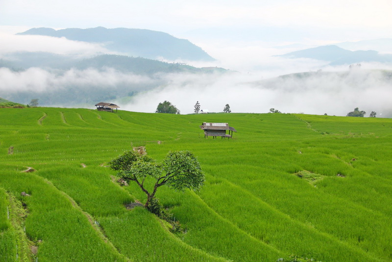 attractions in chiang mai, chiang mai attractions, mae jam, mae jam village, rice terrace in mae jam, step rice field in mae jam