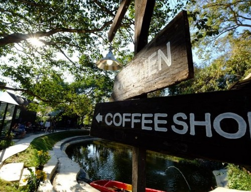 Coffee Shops In Chiang Mai