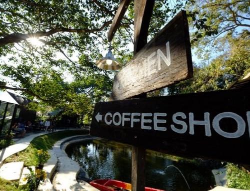 Coffee Shops In Chiang Mai