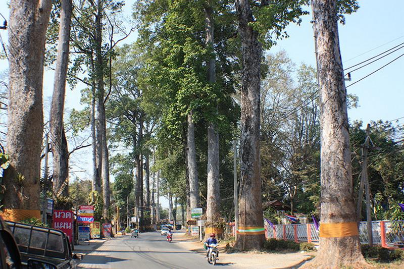 old rubber tree road, rubber tree road, old road chiang mai to lamphun, old road chiang mai lamphun, rubber road chiang mai lamphun, old rubber road, Highway No.106, Highway No.106 chiang mai lamphun