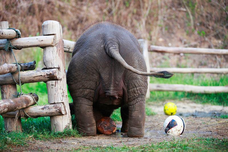 thai elephant conservation centre, thai elephant conservation center, thai elephant conservation centre lampang, elephant conservation centre, elephant conservation centre lampang, elephant conservation center, elephant conservation center lampang, elephant hospital lampang, elephant hospital thailand