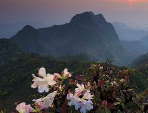 Doi Chong National Park