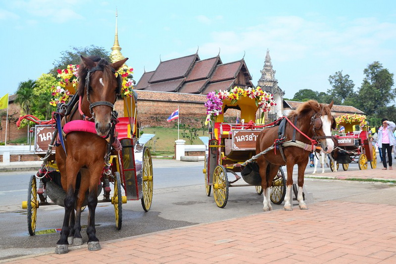 lampang horse carriage, lampang wagon, lampang horse tour