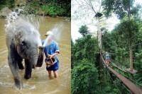 tour elephant and zipline, full day tour elephant and zipline, budjet tour elephant and zipline, day tour elephant and zipline, join in group tour elephant and zipline