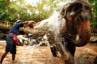 maesa elephant camp, elephant at work