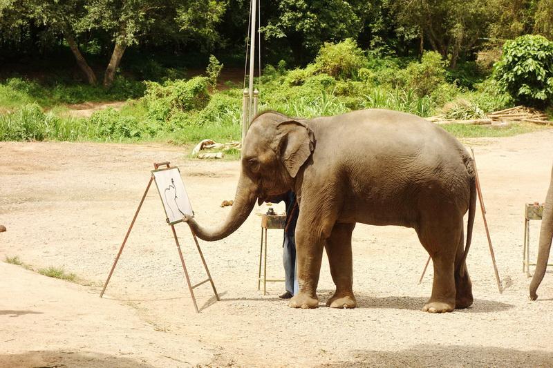 join in group tour elephant safari, elephant safari tour, chiang mai elephant safari tour, budget tour elephant safari, join in group elephant safari tour, day tour elephant safari
