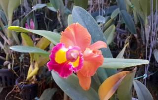 orchid and butterfly farm, orchid and butterfly farm mae rim, butterfly farm mae rim, orchid farm maerim