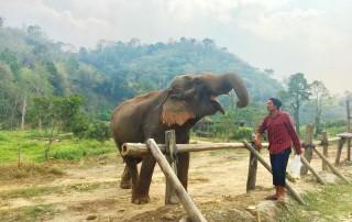 karen elephant camp, chiang mai elephant camp, local elephant camp in chiang mai