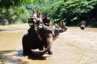 elephant safari tour, chiang mai elephant safari tour, chiang mai elephant safari